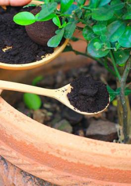 Le marc de café : l'or brun du jardin !